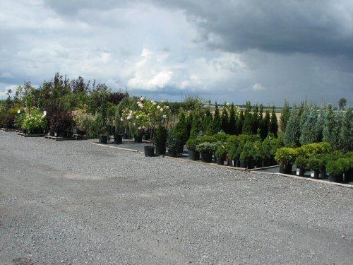 arbre-arbuste