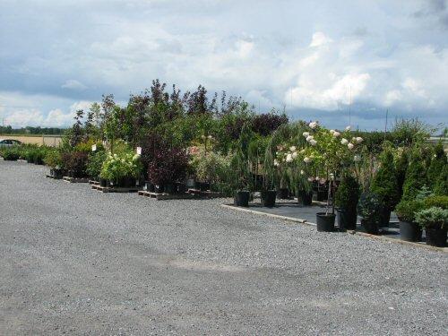 arbre-arbuste3