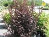 arbuste-2